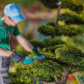 Addetto al giardinaggio e ortofrutticoltura